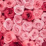 Meaning of Different Color of Roses